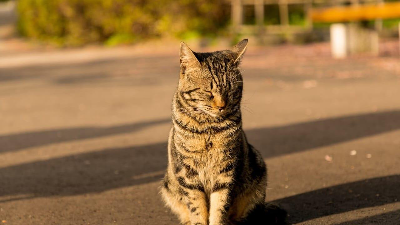 一宮市動物愛護センター猫のイメージ画像