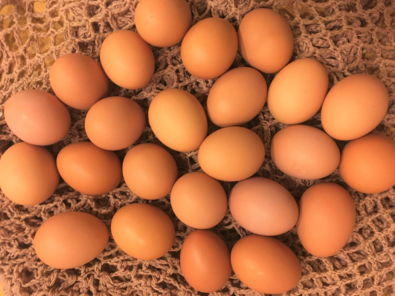 野田養鶏園の初卵